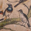 19th-century bird illustration wall card: Nightingale, etc