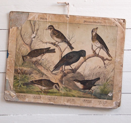 19th-century antique ornithology wall card: Skylark
