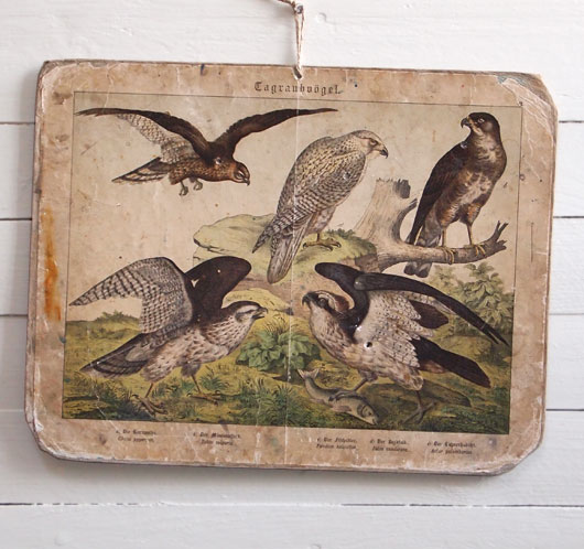 19th-century antique ornithology wall card: Harrier, Osprey
