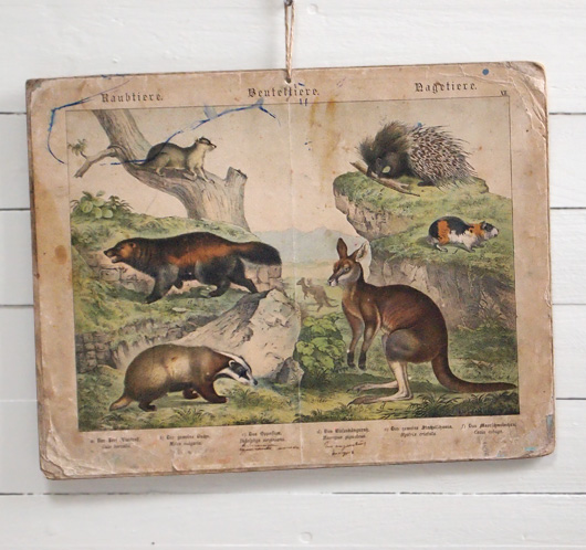 19th-century German animal illustration card: Kangaroo, etc