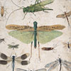 19th-century insect wall card: Beetles, Crickets
