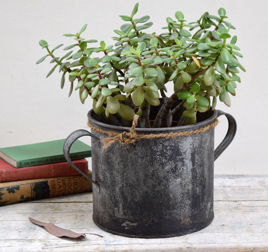 Vintage labourer's zinc tub or bucket planter with carry handles