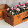 Elongated 1970s Schweppes wooden carry crate