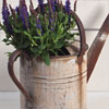Early-1900s weathered zinc watering can planter