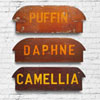 Wooden rowing boat name sign wall hanging: 'Camellia'