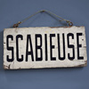 Early-1900s French wooden sign: Scabieuse