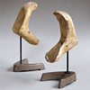 Mounted antique cast animal jaw