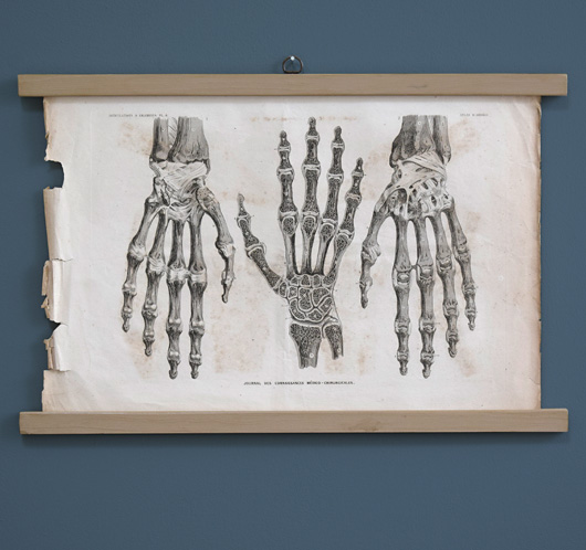 Mounted 19th-century antique medical engraving: Joints & Ligaments