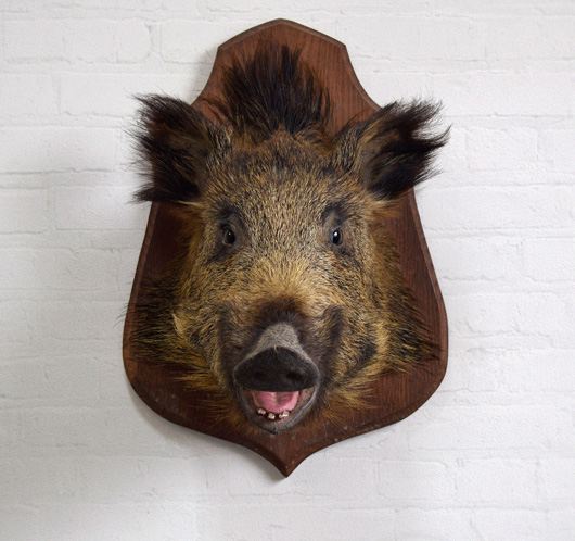 Antique wild boar head taxidermy wall hanging, early 1900s